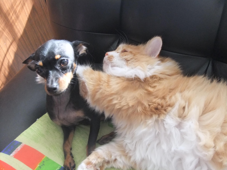 Я кот Рыжик, а это мой друг Куба
