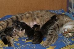 """""""Материнство"""" Котятам дня три от роду."""
